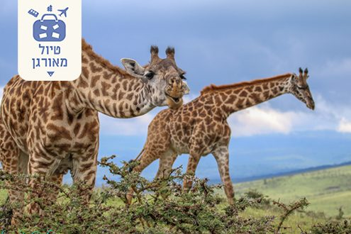 טיול ספארי לטנזניה