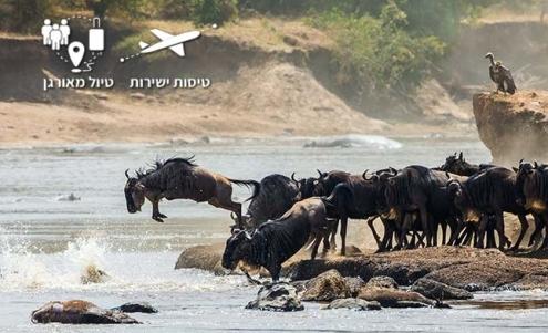 גנו חוצה את נהר המארה בקניה