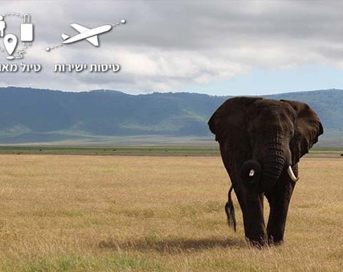 פיל במכתש נגורונגורו בטנזניה