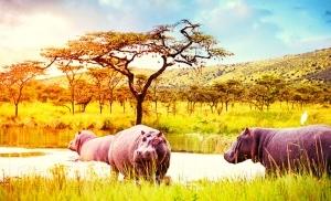 שמורת אקגרה ברואנדה