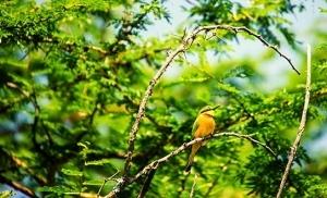 ציפור בפארק הלאומי ארושה בטנזניה