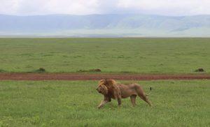טיול בטנזניה