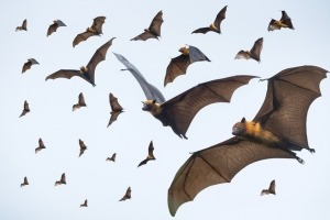 Flying bats on blue sky