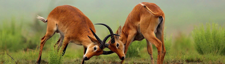 ספארי-בקניה-ונופש-מפנק-בזנזיבר