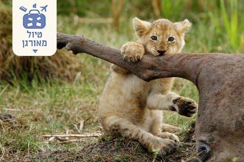 טיול-מאורגן-לטנזניה-בעונת-ההמלטות-עם-מיי-טריפ