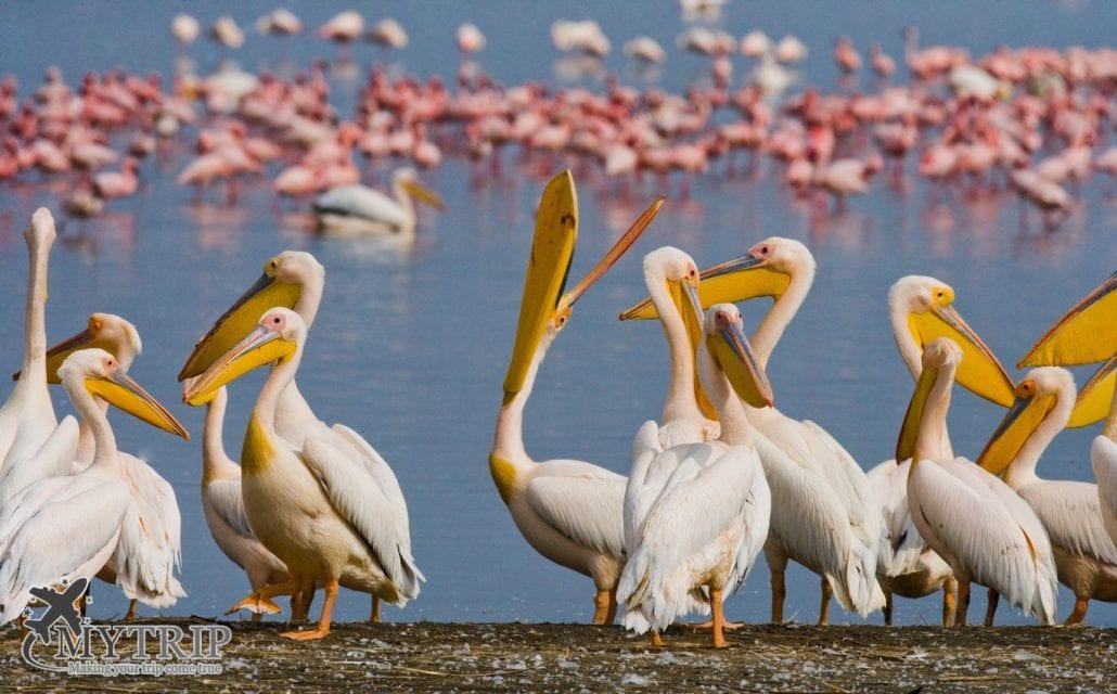 אגם נקורו קניה