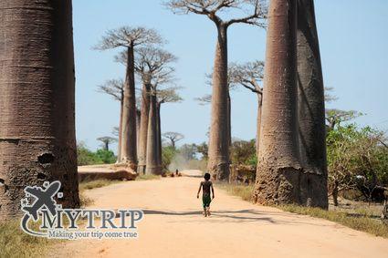 אדנסוניה מדגסקר