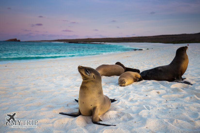 אריות ים בגלפגוס