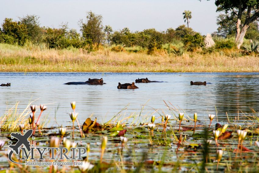 טיול לבוצואנה