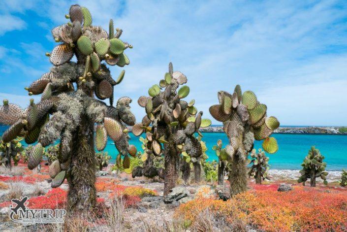 האי פלזה גלפגוס