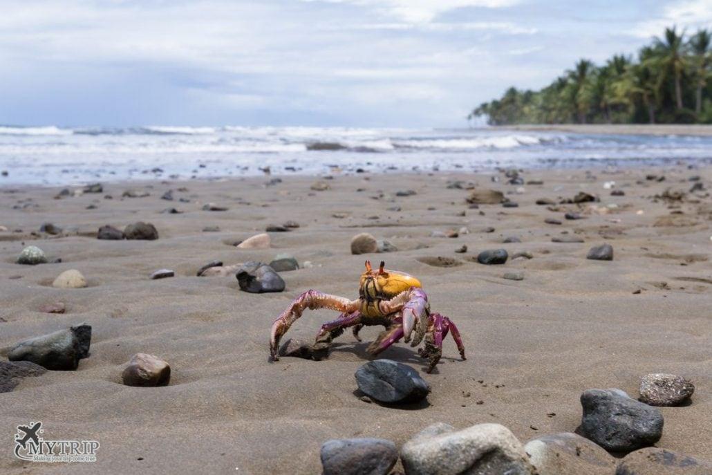 הים בקוסטה ריקה