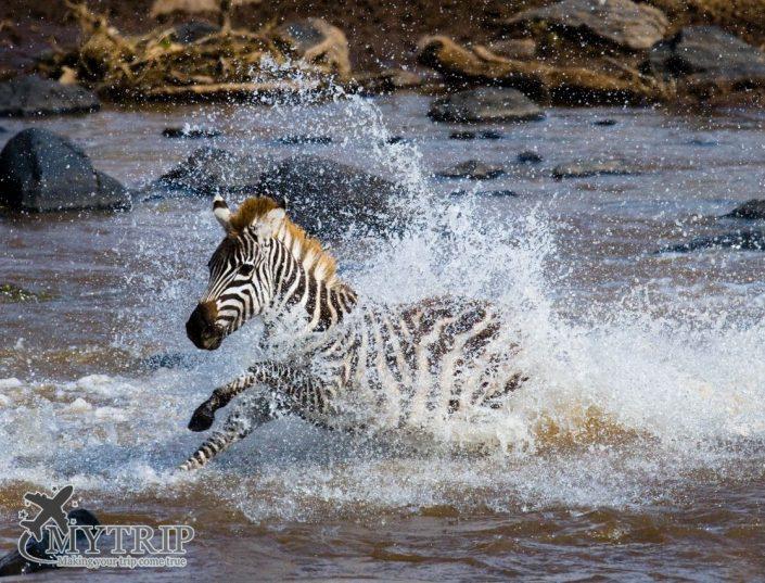 הנדידה הגדולה בקניה