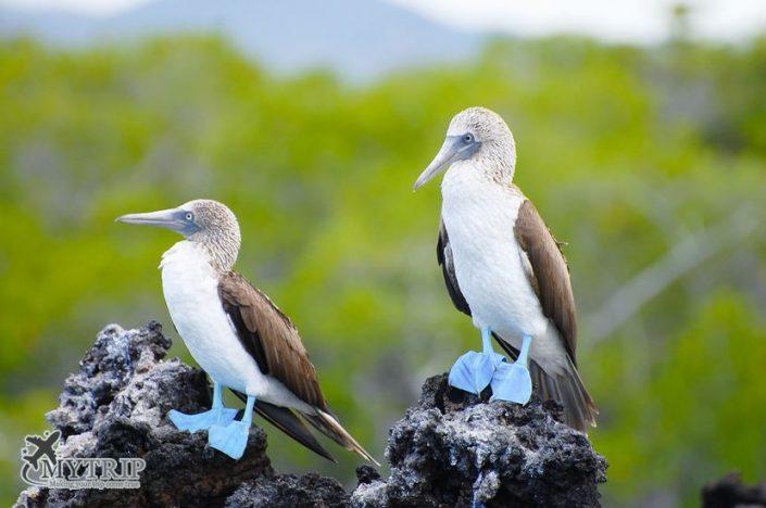 חיות נדירות באיי גלפגוס