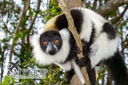 חיות במדגסקר
