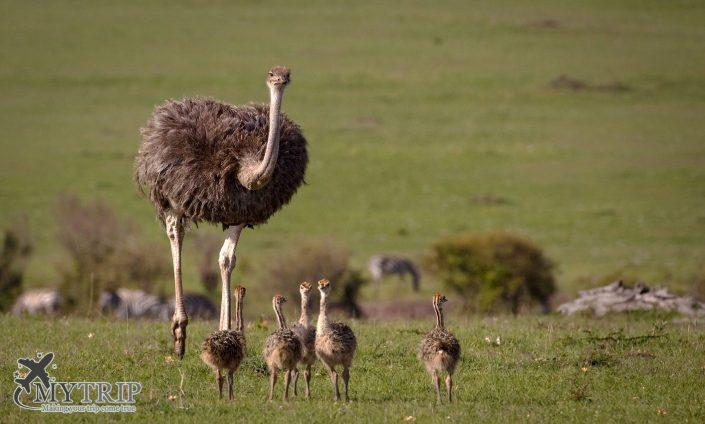 חיות בקניה