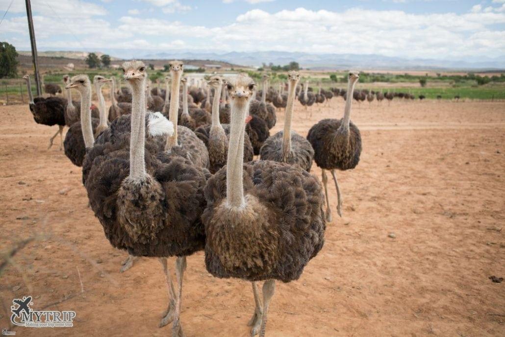 חיות - טיול לדרום אפריקה