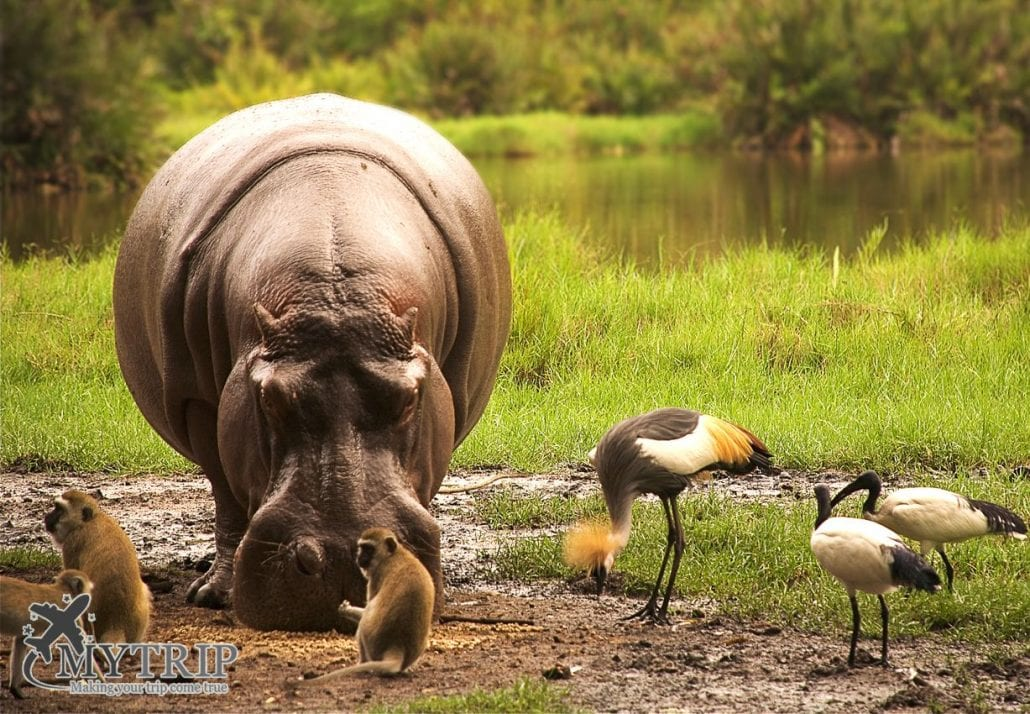 טבע בטיול ספארי בקניה