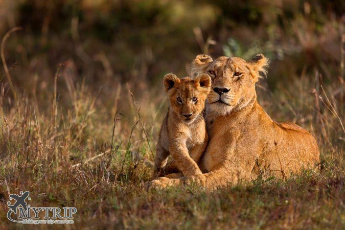 טיול ספארי בקניה