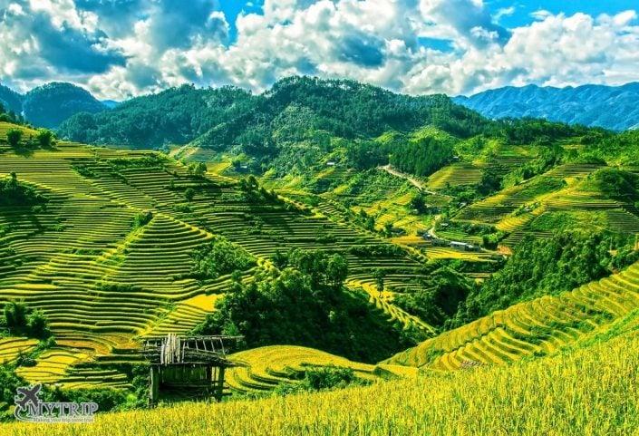 טראסות אורז בווייטנאם