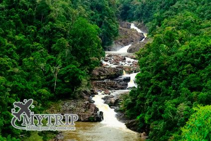 Evergreen tropical rainforest with rocky small waterfall crossing in the middle in Ranomafana national park Madagascar - מדגסקר