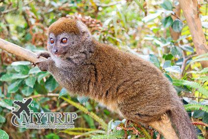 פארק - מדגסקר