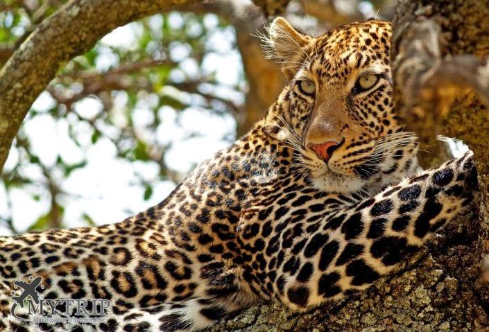 מסאי מארה קניה אפריקה