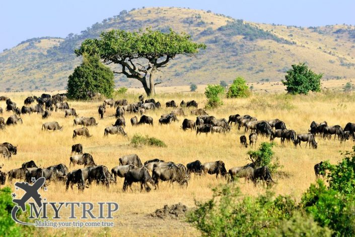 Masai Mara, קניה