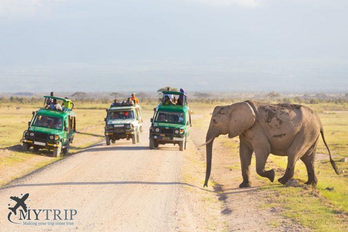 ספארי בקניה