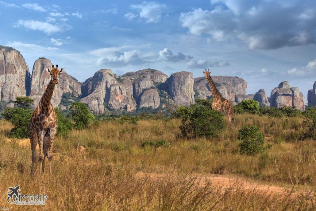 ספארי מיוחד בדרום אפריקה