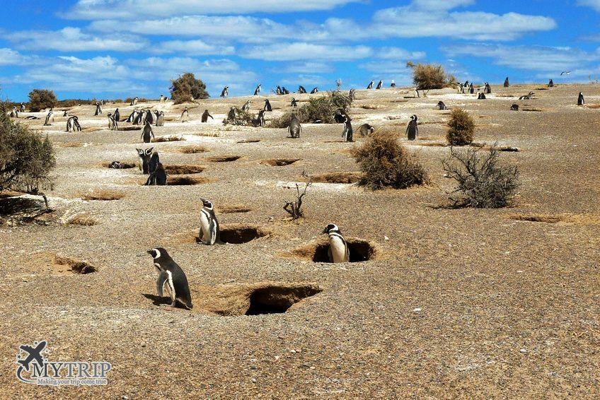 פינגווינים בארגנטינה