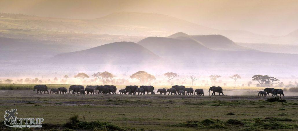 פילים בקניה