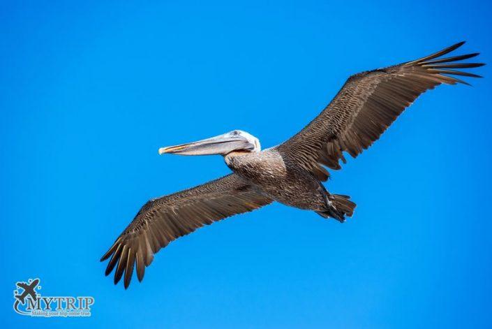 ציפורים בגלפגוס