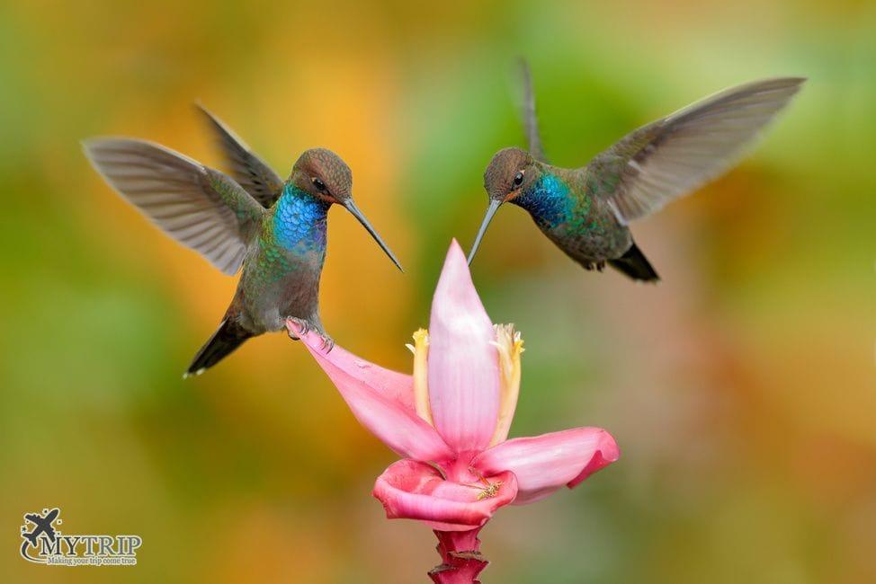 ציפורים בטיול לקולומביה