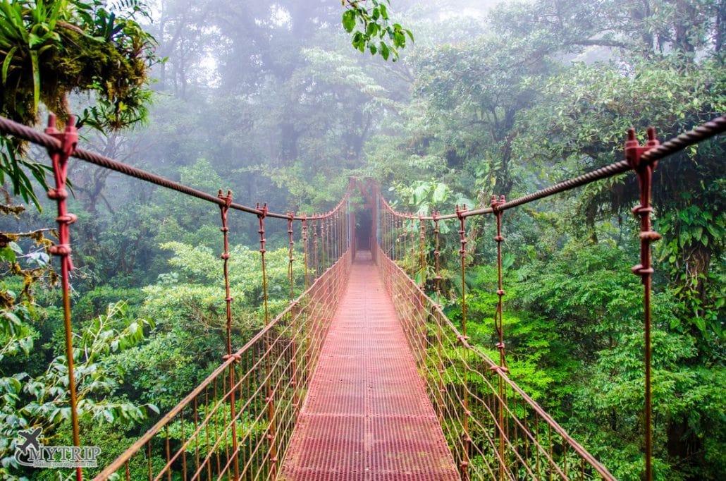 גשר תלוי בצבע כתום ביער העננים מונטה ורדה