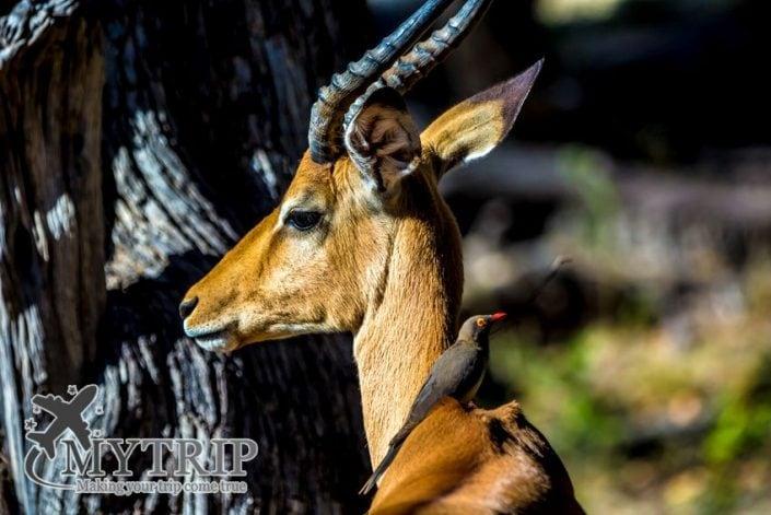 שמורת טבע בוטצואנה