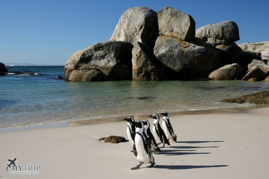 תמונות דרום אפריקה