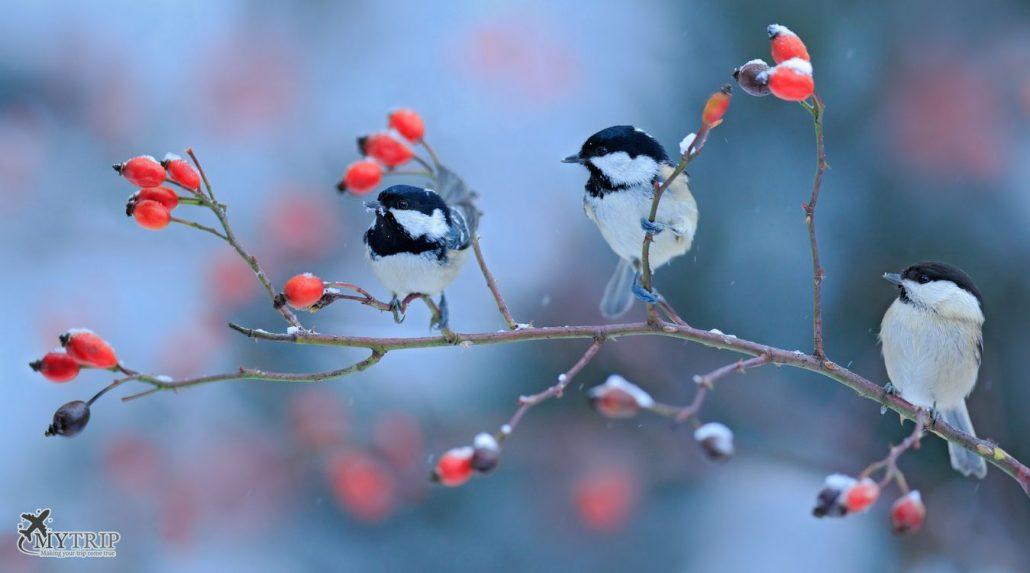 תמונות קוסטה ריקה - ציפורים