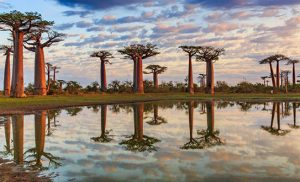 שדרות הבאובב במדגסקר