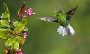 ציפור מיוחדת בקוסטה ריקה