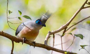 ציפור מיוחדת בשמורת ברנטי במגסקר