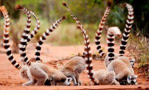 קבוצת למורים בשמורת וקונה במדגסקר
