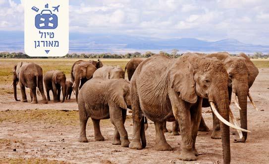 טיול מאורגן לקניה עם מיי טריפ