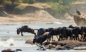 ספארי בטנזניה בנדידה הגדולה
