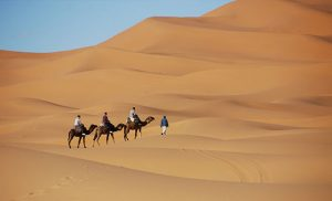 שיירת גמלים במדבר במרוקו