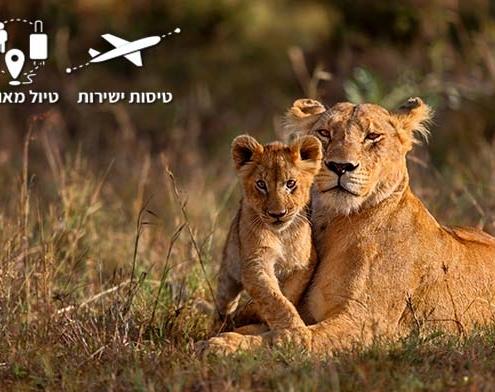 לביאה וגור אריות בסוואנה