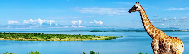 בעלי-החיים-המיוחדים-ונהר-הנילוס-העוצמתי