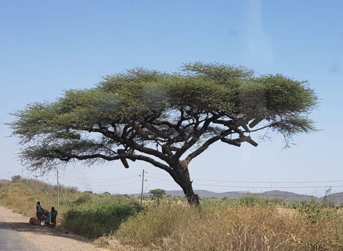 מיי טריפ - טיול לאפריקה