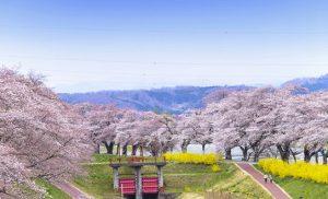 מיי טריפ - טיול מאורגן ליפן