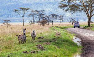 מיי טריפ - ספארי בקניה