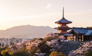 טיול ליפן - מיי טריפ